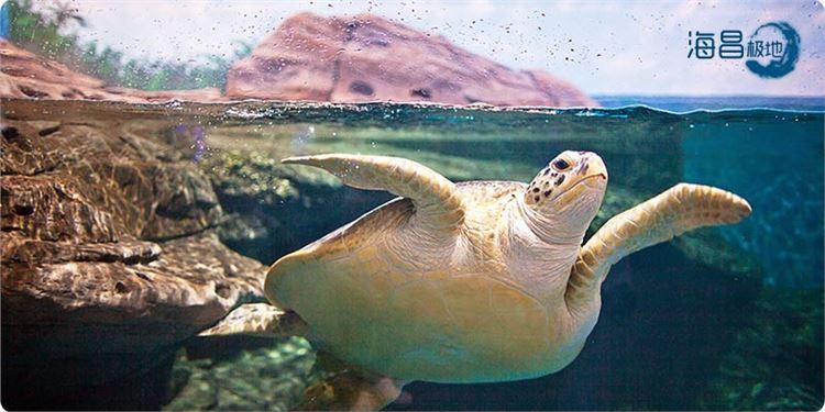 【招募】2015海昌海洋公园验客大赛-7大主题公园验客招募啦~