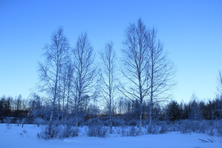 【漠河,寻找极寒下的温暖脉络】东北5日详细攻略