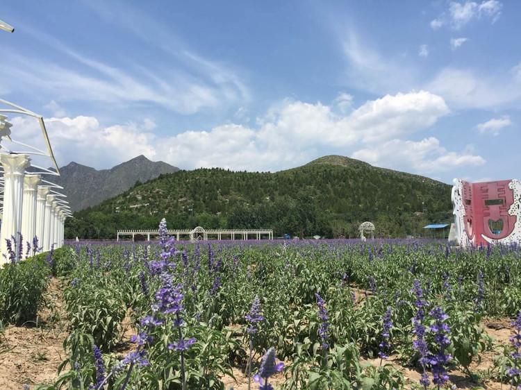 北京房山爱琴海薰衣草庄园一日游