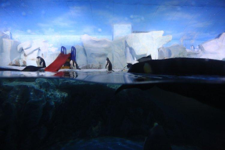 【2015海昌海洋公园验客大赛】炎炎夏日,来感受极地海洋世界的清凉和神奇吧