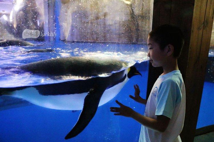 【2015海昌海洋公园验客大赛】与鲸共舞与鲨同眠,我和孩子与青岛的第一次亲蜜接触