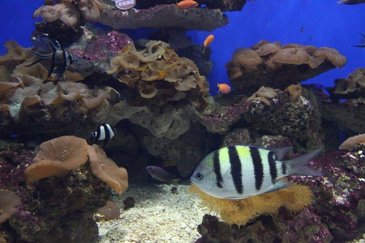 【2015海昌海洋公园验客大赛】风情烟台 与鲨同游
