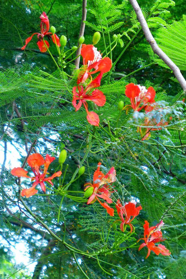 麓湖盛夏的光彩--瀑布与鲜花