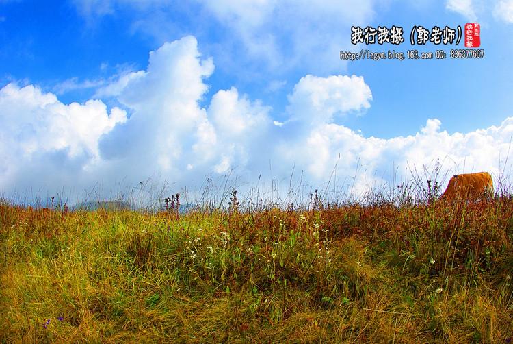 【晋城沁水历山验客】舜王坪高山草原药草奇花 女英峡娥皇谷雄奇险阔幽 - 我行我摄 - 我行我摄艺术屋