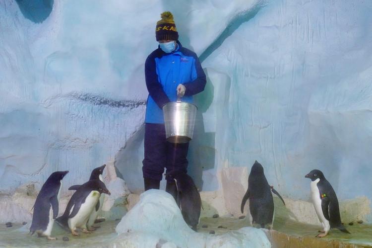 「企鹅馆」有两大极地动物明星——全球体型最大的帝