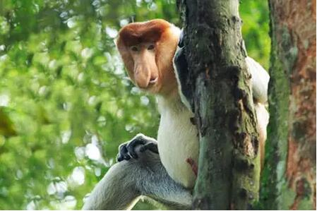 动物园里的猴子种类多,除了让你对猴子的见识增长更让你欣喜若狂!