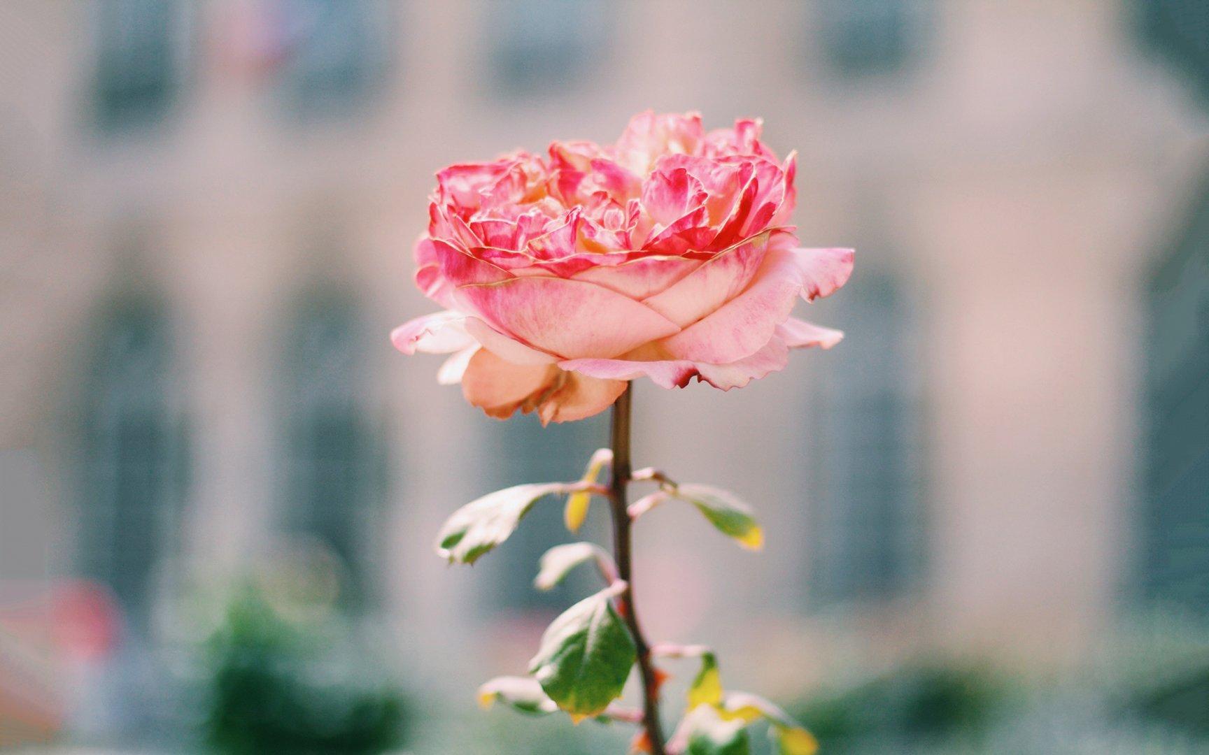 亚龙湾国际玫瑰谷图片