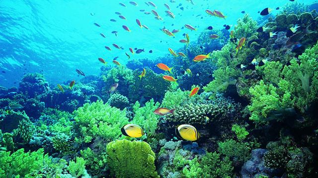普吉岛6日或7日游0自费,升级一晚长岛蓝湾别墅,蓝钻岛,人妖秀,浮潜观