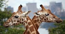 澳大利亞悉尼塔龍加動物園
