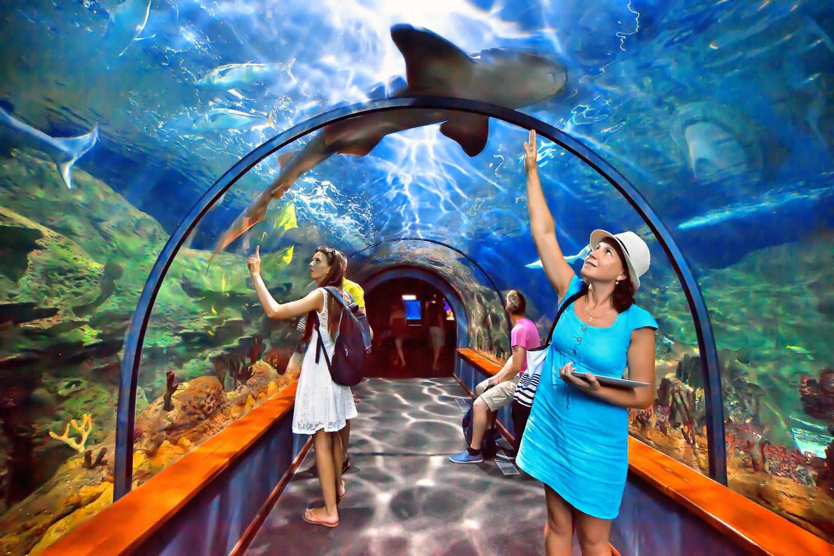 壁纸 海底 海底世界 海洋馆 水族馆 1620_1080