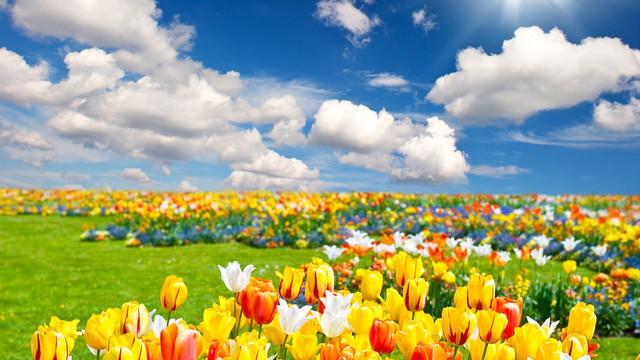 春天公园里的景色