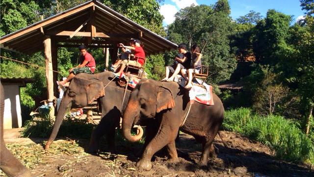 新加坡民丹岛大象公园