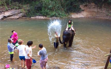 【親密接觸大象】美旺大象營半日游(騎大象+喂養大象+大象洗澡)