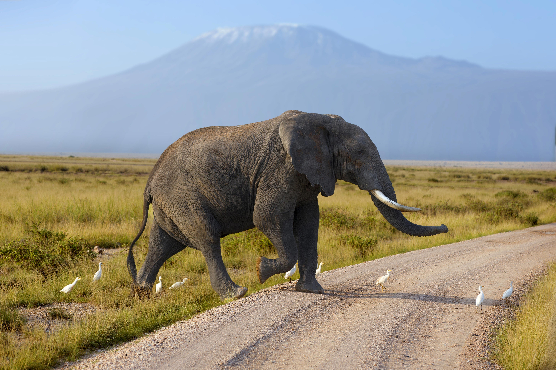 动物大迁徙-肯尼亚8日游