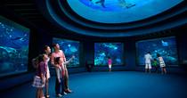 新加坡SEA海洋館