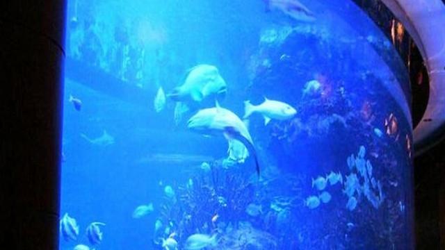 迪拜海底餐厅马桶图片