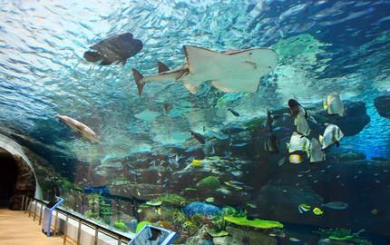波士顿新英格兰水族馆