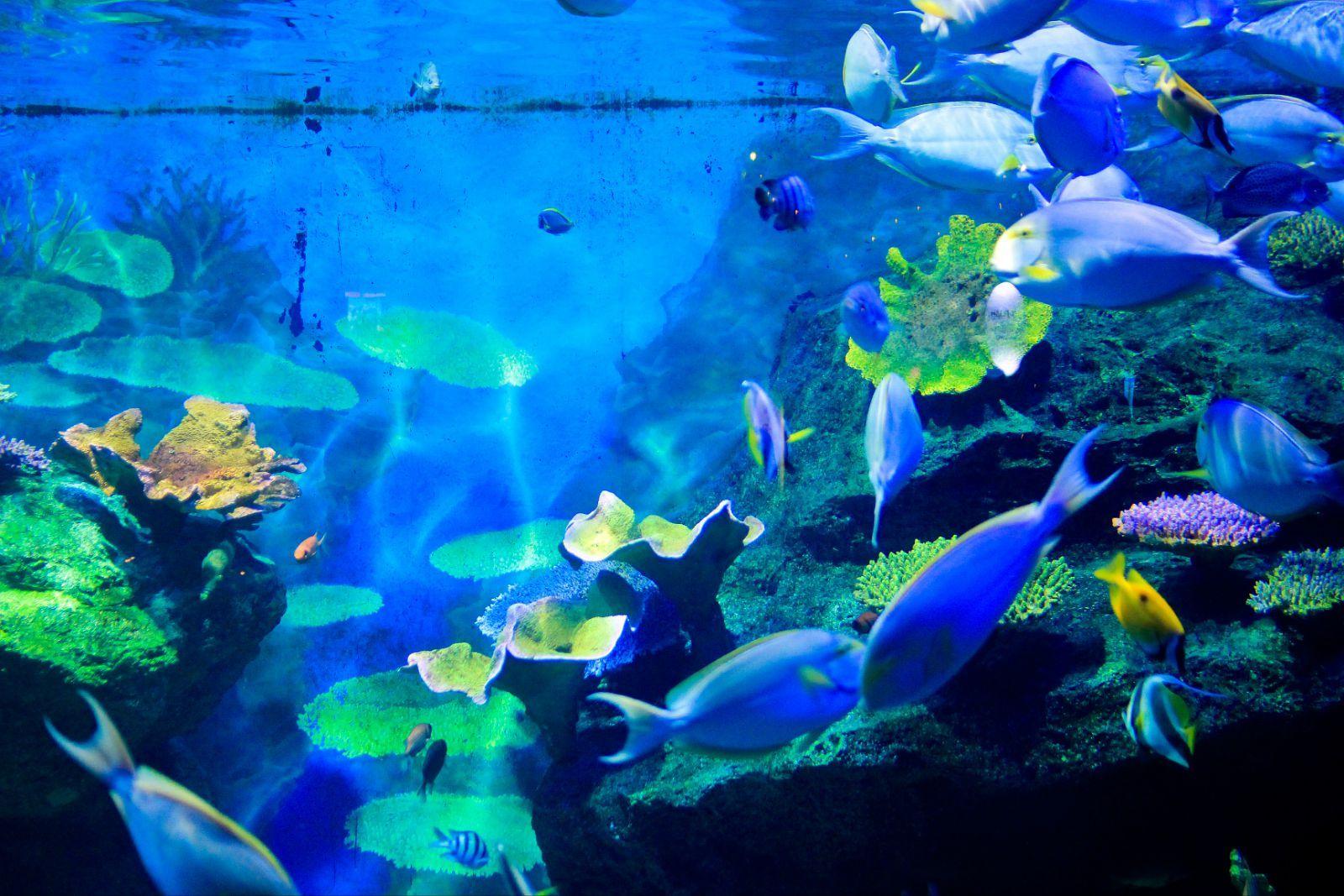 壁纸 海底 海底世界 海洋馆 水族馆 桌面 1600_1067
