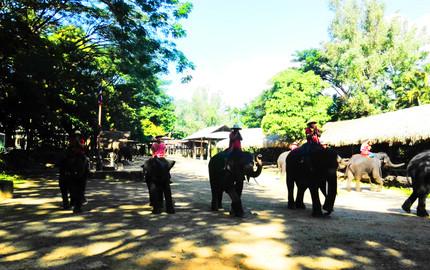 【觀賞大象繪畫】清邁 美莎大象營+叢林飛躍一日游