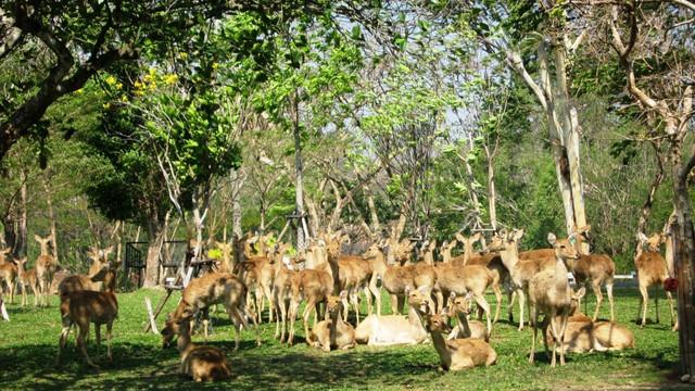 曼谷丛林飞跃+绿山野生动物园一日游