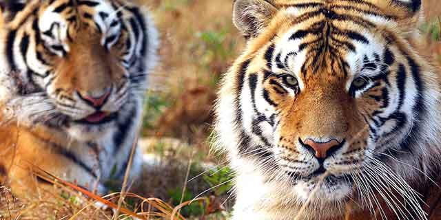 上海野生动物园门票_上海野生动物园旅游攻略