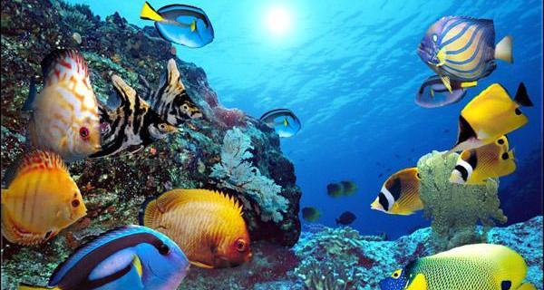 赏蓬莱山海美景,观海洋动物憨态,蓬莱二日经典游