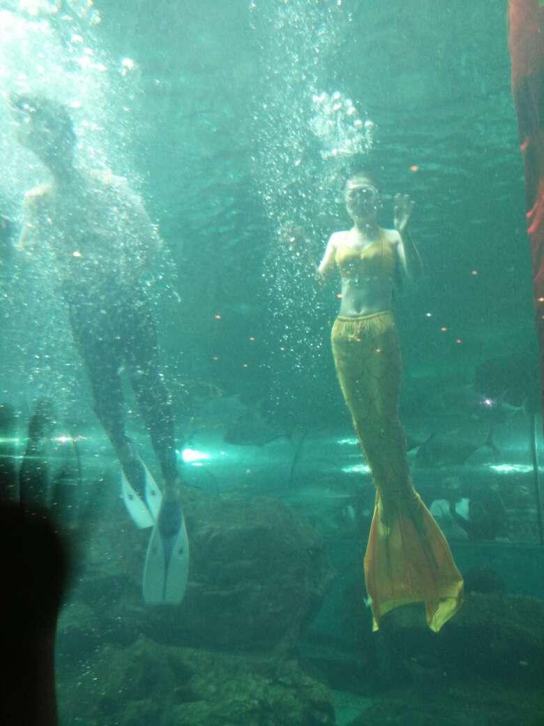 壁纸 动物 海底 海底世界 海洋馆 水族馆 鱼 鱼类 780_1040 竖版 竖屏