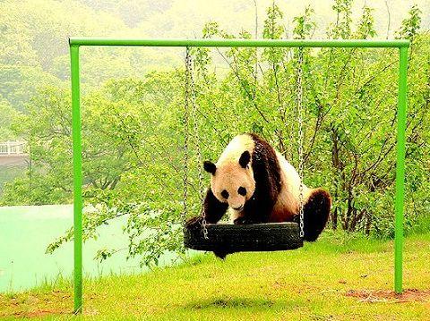 青岛金沙滩希尔顿酒店 青岛森林野生动物世界/青岛金沙滩景区(免费)