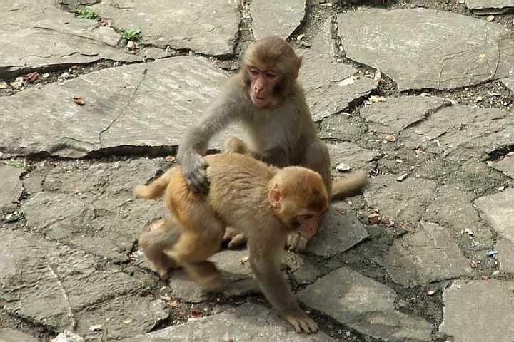 """""""这是南京红山森林动物园"""