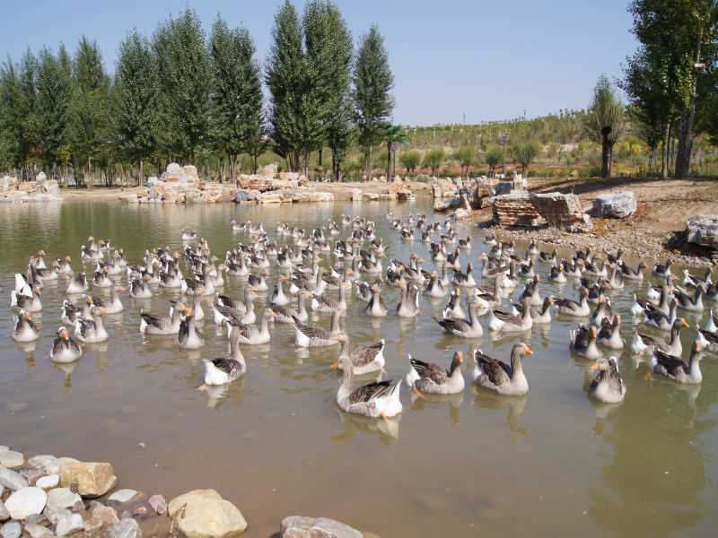 鄂尔多斯景点门票大全 鄂尔多斯野生动物园  aaaa级景区 地址:内蒙古