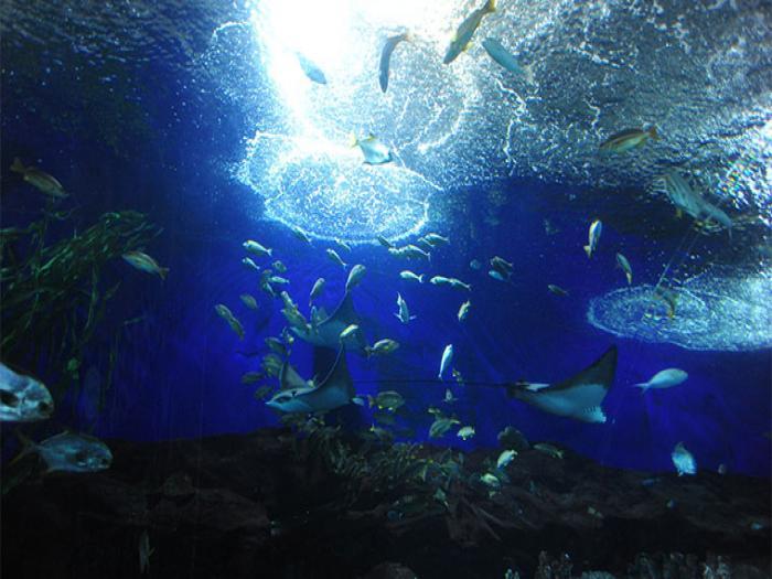 新加坡海底世界和海豚乐园