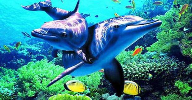 壁纸 动物 海底 海底世界 海洋馆 水族馆 鱼 鱼类 620_324