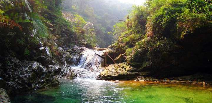 南海湾森林生态园图片