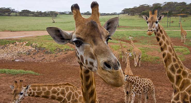 同程首页 国际景区门票 > 阿德莱德野生动物园门票   以上图片均由
