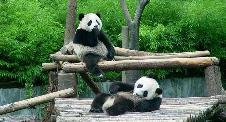 阿德莱德野生动物园门票
