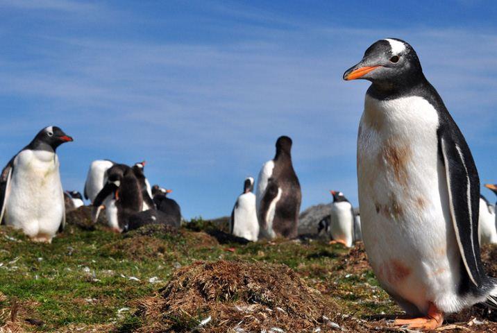 菲利普企鹅岛及野生动植物探险一日游