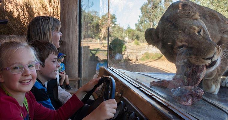 墨尔本威勒比开放式动物园门票(含探险游览车,英文讲解)