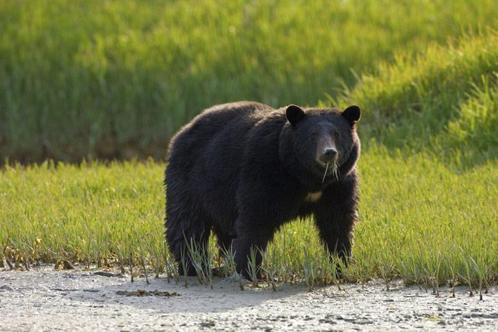 亚利桑那野生动物公园之旅 野生棕熊观测绝佳地点