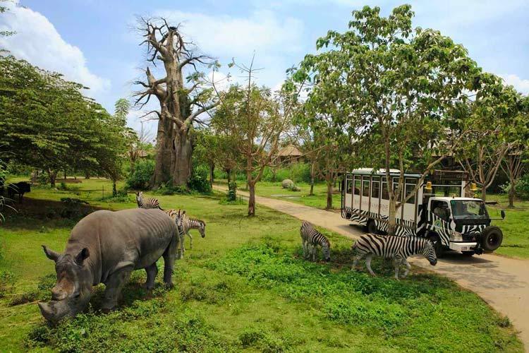 巴厘岛亲子欢乐游-野生动物园 海岸单车 下午茶