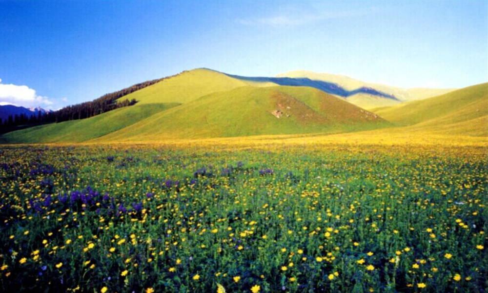 进入山上,如果心态平和,走到森林旁边或者能够进入山后,景色还是很美
