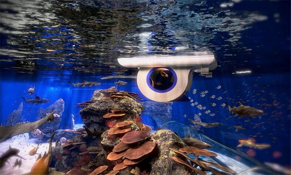 成都海滨城浩海立方海洋馆攻略莎芭萝图片
