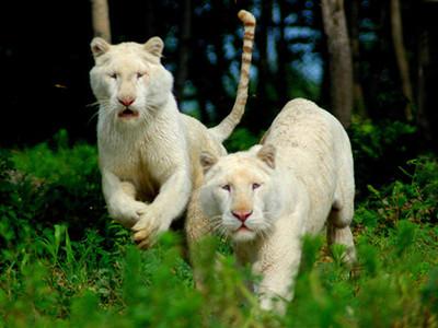 北方森林动物园