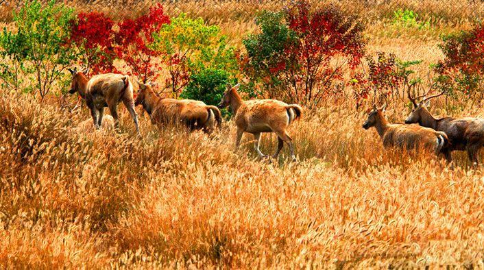 大丰麋鹿国家级自然保护区
