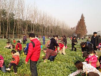 作为上海市农业方面的节庆活动,有助于现代农业科普知识的推广.