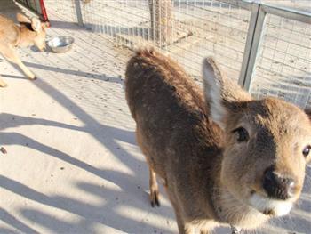 北京朝阳公园欢乐岛亲子动物乐园,位于北京市朝阳区朝阳公园内,占地