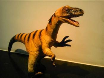 和旧石器标本及模型,全面展现了史前动物和古人类的自然遗存和遗迹