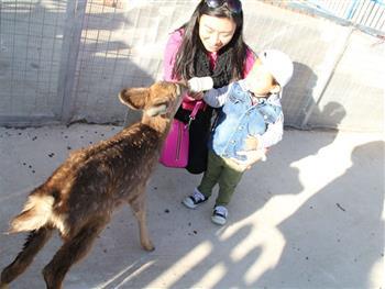 【朝阳公园欢乐岛亲子动物乐园】北京朝阳公园欢乐岛