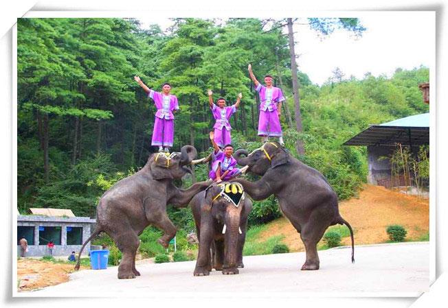 贵阳森林野生动物园以野生动物和森林景观的展示观赏