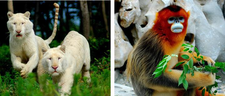 狼鹿与森林结构图