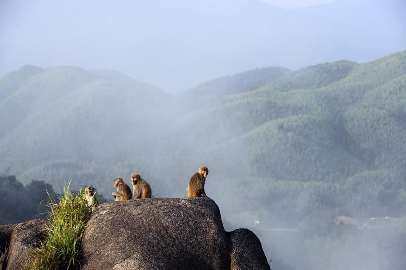 粤湘赣四省联合进行的华南虎野外调查后认为梅花山保护区是现存